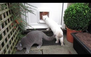 How to Get a Cat to Use a Microchip Cat Flap?