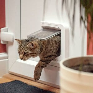 How Does a Microchip Cat Flap Work?