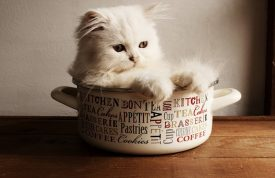 5 Effective Ways To Stop Cats Jumping On Kitchen Surfaces