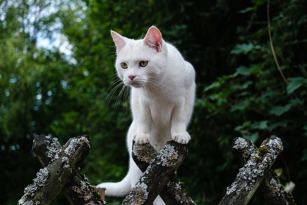 6 Things That Stop Cats From Pooping In Your Yard