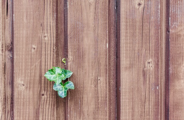 Top 4 Ways To Stop Ivy From Coming Through The Fence