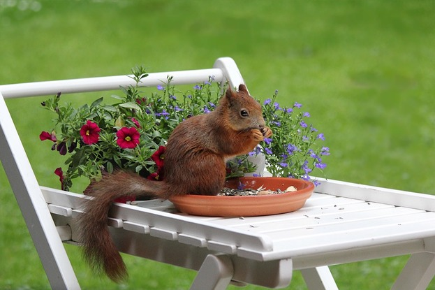 7 Ways To Stop Squirrels From Digging In Your Garden
