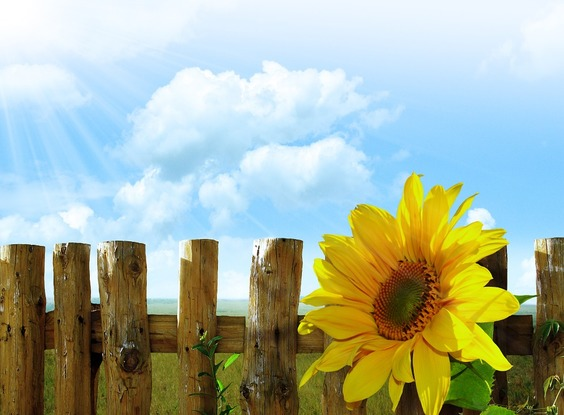 Want A Sunny Garden? This Is The Best Direction